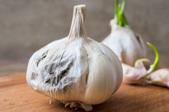 Rotting garlic Stock Image