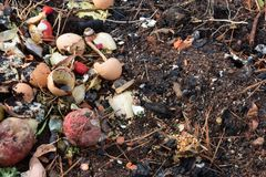 Rotting kitchen scrap compost on earth mixed with pine needles and burned wood. Horizontal aspect stock images
