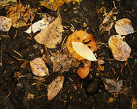 Rotting Leaves Royalty Free Stock Photography