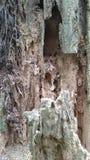 Rotting logs, wood fiber, wood texture. royalty free stock image
