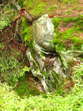 Rotting stump. With visible roots covered with lichens or algae Stock Image
