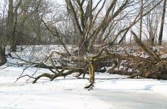 Rotting tree Stock Photos