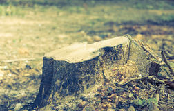Rotting tree ( Filtered image processed vintage effect. ) Royalty Free Stock Photography
