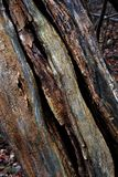 Rotting tree textures. Texture of the rotting wood of a dead tree with splits and cracks and varied color of decaying wood Royalty Free Stock Photography