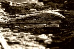 Rotting Tree Trunk abstract royalty free stock images