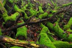 Rotting trees Stock Image