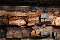 Rotting wood. Closeup of rotting wood, termite damage Royalty Free Stock Photo