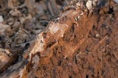 ROTTING WOOD AND BROKEN MUD HEAP Stock Image
