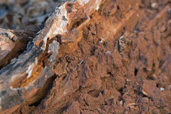 ROTTING WOOD WITH BUILT UP MUD AND CLAY. Broken up earth mound built up against piece of wood Royalty Free Stock Photography