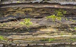 Free Rotting Wood Detail Royalty Free Stock Image - 88263776