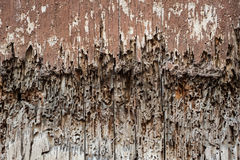 Rotting wood door background Royalty Free Stock Image