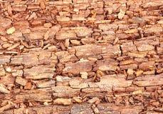 Rotting wood Stock Image