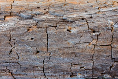 Rotting wood texture Royalty Free Stock Photography