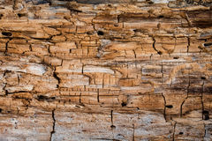 Rotting wood texture Stock Photography