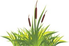rottinggräs Royaltyfria Bilder