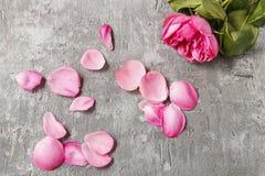 Rotto è aumentato - il simbolo di amore rotto Fotografia Stock