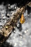 Rottura ambrata Fotografie Stock Libere da Diritti