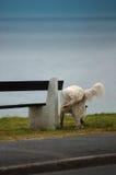 Rottura del cane Fotografia Stock Libera da Diritti
