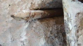 rottura dell'unghia Immagini Stock