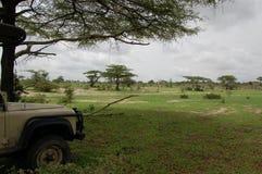 Rottura di safari Fotografie Stock
