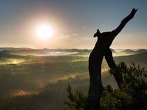 Rottura sul picco roccioso Albero selvaggio rotto dei bonsai del pino Fotografia Stock