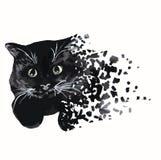 Rotture del gatto nero nei pezzi fotografie stock libere da diritti