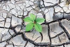 Rotture della pianta attraverso la terra immagini stock