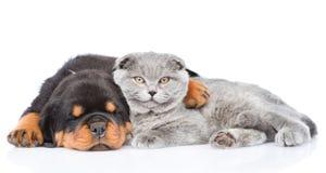 Rottweiler小狗拥抱逗人喜爱的小猫 在白色 免版税库存照片