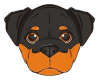 rottweiler的面孔 库存图片