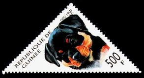 Rottweiler (天狼犬座familiaris),狗serie,大约1997年 库存图片