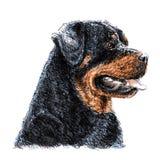 rottweiler Стоковые Изображения RF