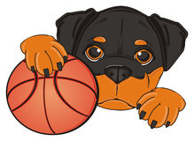 Rottweiler with a ball Royalty Free Stock Photo