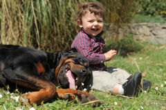 Rottweiler and child Stock Photo