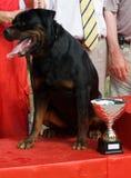 Rottweiler con su premio imagenes de archivo