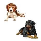 Rottweiler dog, beagle puppy sitting in front of a Stock Image