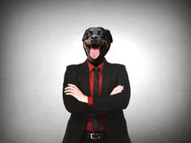 Rottweiler Dog dressed up as formal business man Royalty Free Stock Image