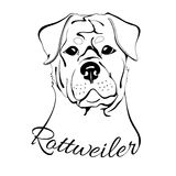 Rottweiler dog head. Outline drawing of the dog's head and the words rottweiler Royalty Free Stock Photo