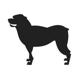 Rottweiler Dog Vector Black Silhouette Stock Image