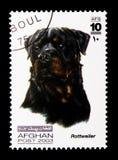 Rottweiler (familiaris) di canis lupus, serie dei cani, circa 2003 Immagini Stock Libere da Diritti