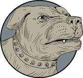 Rottweiler Guard Dog Head Angry Drawing Stock Image