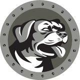 Rottweiler Guard Dog Head Metallic Circle Retro Stock Images