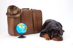 Rottweiler kłama blisko podróży walizki Fotografia Stock