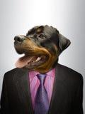 Rottweiler pies ubierał up jako formalny biznesowy mężczyzna  Zdjęcia Stock