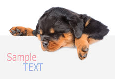 Rottweiler puppy peeking from behind empty board.  on wh Stock Photo