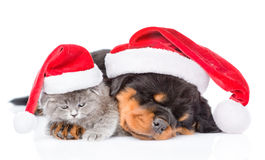 Rottweiler puppy and small kitten in christmas hats lying togeth Stock Photos