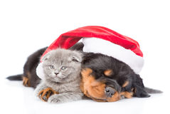 Rottweiler puppy and small kitten in red santa hat. isolated on white Royalty Free Stock Photography
