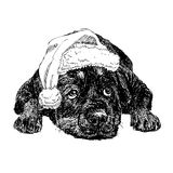 Rottweiler with santa claus hat Stock Images