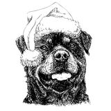 Rottweiler with santa claus hat Royalty Free Stock Images
