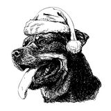 Rottweiler with santa claus hat Royalty Free Stock Photography