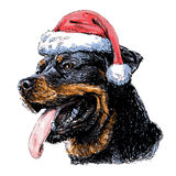Rottweiler with santa claus hat Stock Image